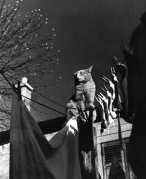 Dans la Cours, c.1954 by Izis