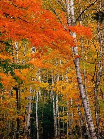 Autumn Foliage, USA by Izzet Keribar
