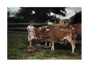 A Girl Feeds Calves on a Pennsylvania Dutch Farm by J. Baylor Roberts