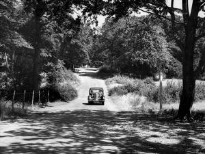 Burnham Beeches by J. Chettlburgh