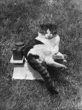 Cat on the Scales by J. Chettlburgh