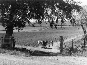 Horse Plough by J. Chettlburgh