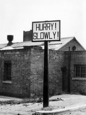 'Hurry! Slowly!' by J. Chettlburgh