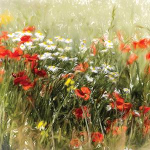 Poppy Field by J. Cottingham