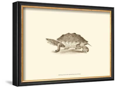Sepia Turtle II