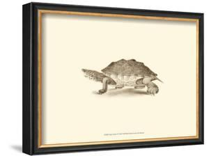 Sepia Turtle II by J. H. Richard