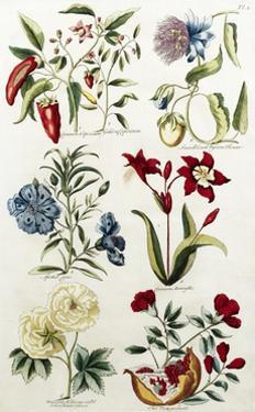 Botanical Print of a Variety of Flowers by J. Hill