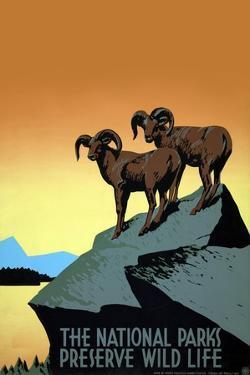 National Parks Preserve Wild Life by J. Hirt