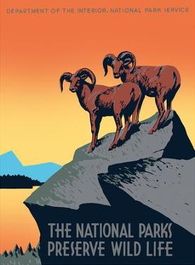 The National Parks Preserve Wild Life - Bighorn Sheep by J. Hirt