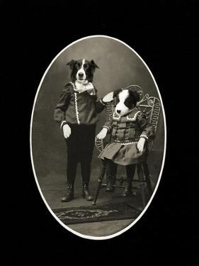 Border Collies by J Hovenstine Studios