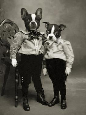 Boston Terriers by J Hovenstine Studios