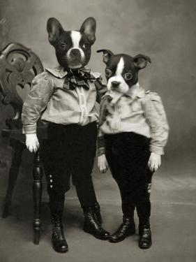 Boston Terriers by J Hovenstine Studios