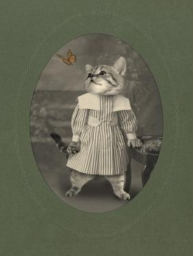 Cat Series #2 by J Hovenstine Studios