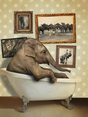 Elephant in Tub by J Hovenstine Studios