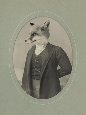 Gentleman Fox by J Hovenstine Studios