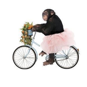 Monkeys Riding Bikes #1 by J Hovenstine Studios