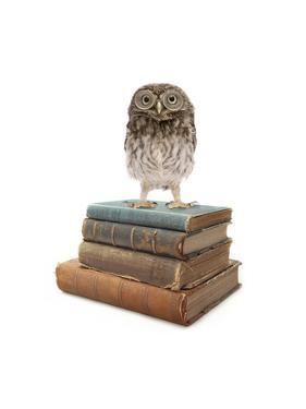 Owl and Books by J Hovenstine Studios