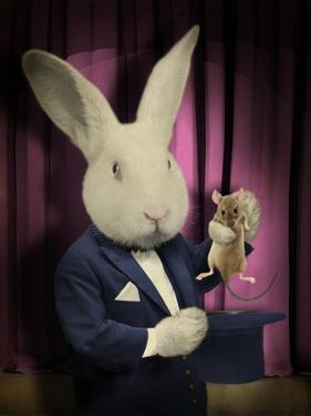Rabbit Magician by J Hovenstine Studios