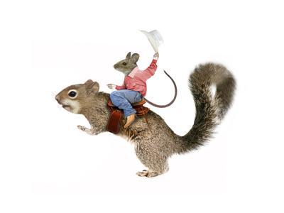Squirrel Rodeo