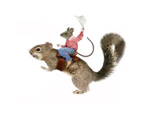 Squirrel Rodeo by J Hovenstine Studios