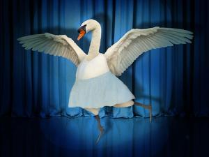 Swan Lake by J Hovenstine Studios