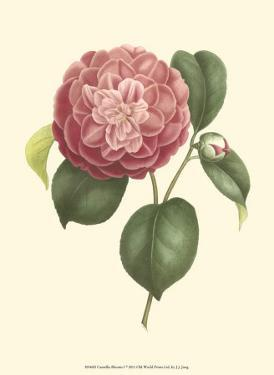Camellia Blooms I by J.J. Jung