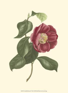 Camellia Blooms II by J.J. Jung