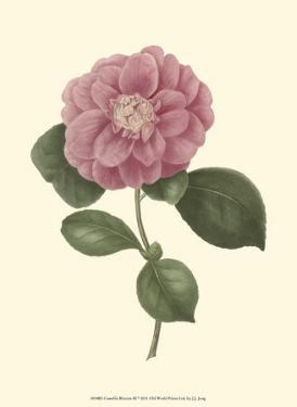 Camellia Blooms III by J.J. Jung
