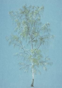 Birch Tree by J. M. W. Turner
