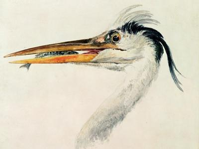 Heron with a Fish by J. M. W. Turner