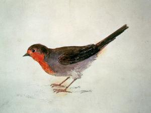 Robin, from the Farnley Book of Birds, C.1816 by J. M. W. Turner