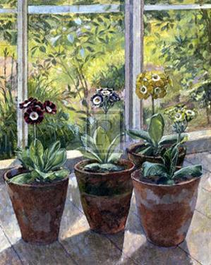 Four Pots of Auriculas by J. Morley