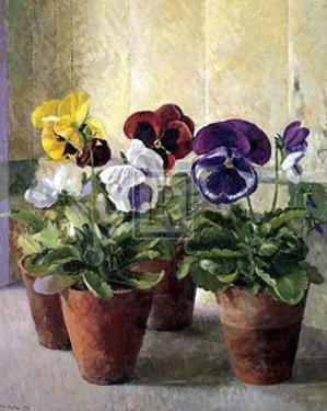 Pansies in Flower Pots by J. Morley