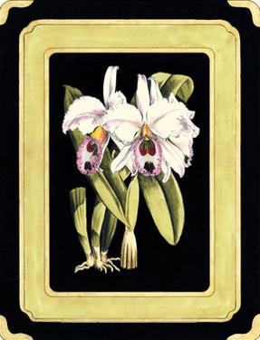 Orchids on Black II by J. Nugent Fitch