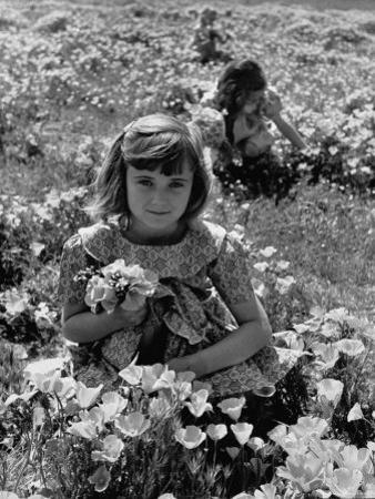Children Playing in a Field of Wildflowers by J. R. Eyerman