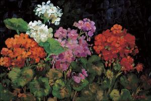 Geranios en el Jardin by J. Ripoll
