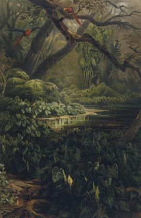 Xanthosoma and Other Exotic Flora and Birds in the Brazilian Jungle