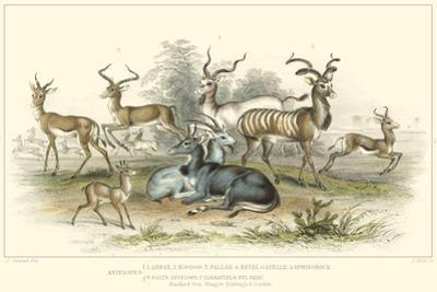 Antelope Varieties