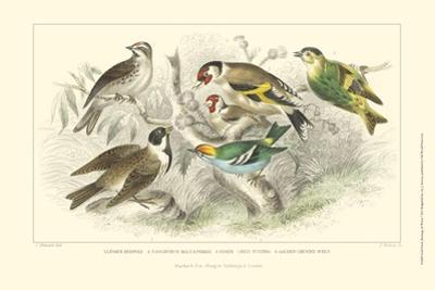 Goldfinch, Buntings & Wrens