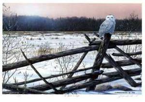 A Winter's Light by J. Vanderbrink