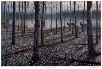 Hardwood Trail by J. Vanderbrink