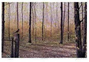 Spring Woodland by J. Vanderbrink