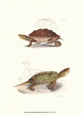 Antique Turtles II by J.W. Hill