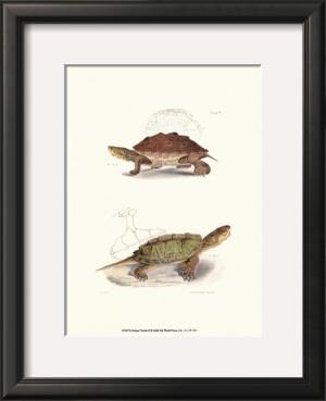 Antique Turtles II by J.W. Hill