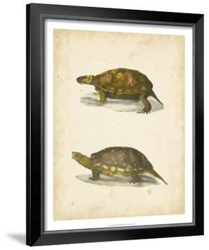 Turtle Duo I by J.W. Hill