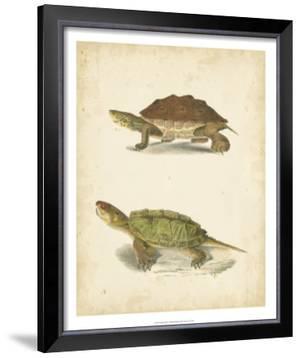 Turtle Duo II by J.W. Hill