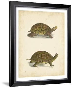 Turtle Duo III by J.W. Hill