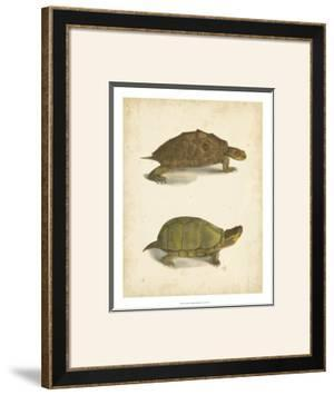 Turtle Duo IV by J.W. Hill