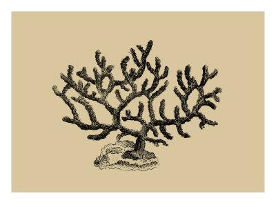 Coral on Khaki III