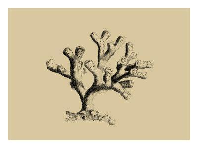 Coral on Khaki IV